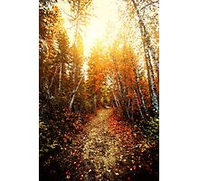 Red Forest, Washington in November Photographic Print