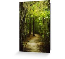 Louisiana Forest, Spanish Moss Greeting Card