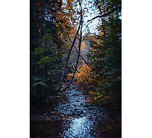 Dank forest Photographic Print