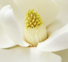 WHITE MAGNOLIA Sticker
