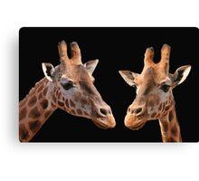 A Pair Of Giraffes Canvas Print