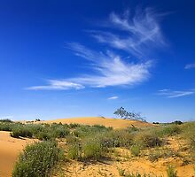 Spring - Perry sand dunes by Hans Kawitzki