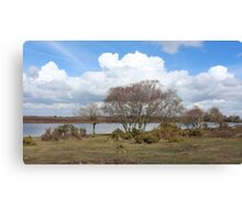 Summer in the new forest Canvas Print