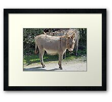 New Forest donkey Framed Print