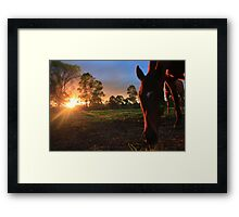 Mares at Sunset Framed Print