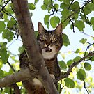 Mishu Posing in His Favourite Tree by Dennis Melling