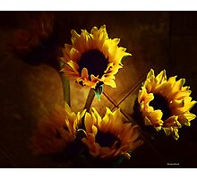 Sunflowers in Shadow Photographic Print