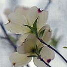 Dogwood Blossoms by Susan S. Kline