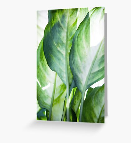 tropic abstract  Greeting Card