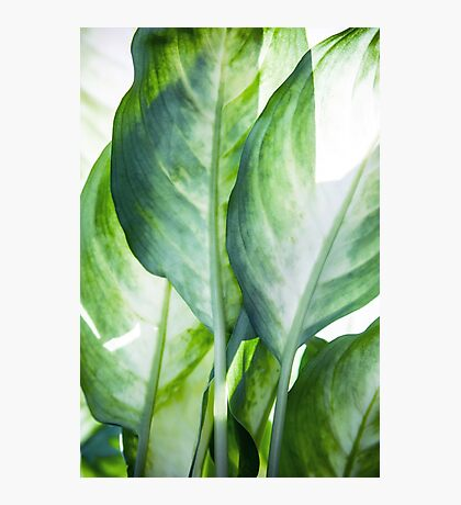 tropic abstract  Photographic Print