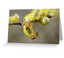 Bees & Cottonwood blooms Greeting Card