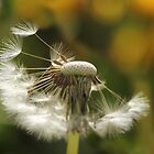 Dandelion Days by Tracy Friesen