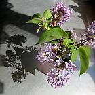 Shadows and Lilacs by Diane Arndt