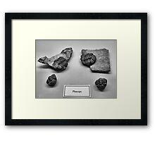 BW16 Framed Print