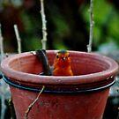 Nesting in the feeding pot by missmoneypenny