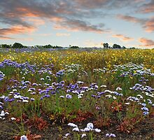 """""""Spring In Carlsbad"""" by Glenn McCarthy"""
