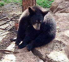 Baby Bear by Sara Hargis