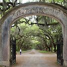 Entrance to the Wormsloe Plantation by Bine