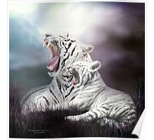 Wild Generations - White Tigers Poster