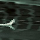 Floating feather by iamelmana