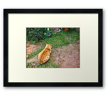 When your cat is angry with you. Framed Print