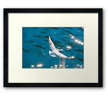 Sea Gull Framed Print