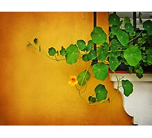 Window Box Photographic Print