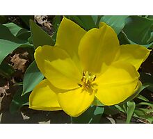 Not-So-Mellow Yellow Photographic Print