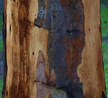 Abstract in Summer Gum Tree Bark  by Virginia McGowan