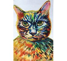 Cat- A- Tude Photographic Print
