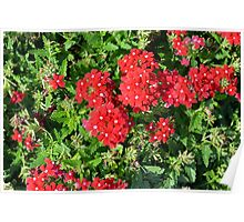 Red flowers bush. Poster