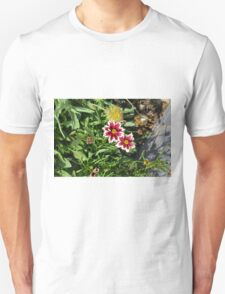 Two pink flowers with white margins in the garden. T-Shirt