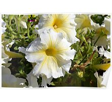 White beautiful flowers in the park. Poster