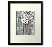 Pebbles on tree stump Framed Print