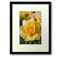 Happy As A Rose in the Sun Framed Print