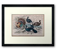 19th century artwork American Wild Turkey,  Framed Print