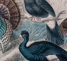 19th century artwork American Wild Turkey,  Sticker