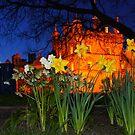 Daffodils at Heriot's by Nik Watt