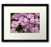 Roses and Buds Framed Print
