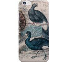 19th century artwork American Wild Turkey,  iPhone Case/Skin