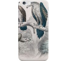 1866 Goldsmith eagle birds print No.2  iPhone Case/Skin