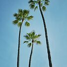 Three Palms by RichCaspian
