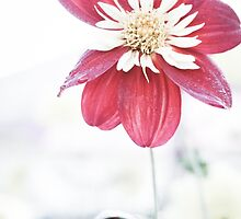 Dahlia flower 1 by Deborah McGrath