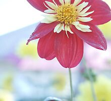 Dahlia Flower 3 by Deborah McGrath