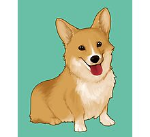 Cute smiling corgi Photographic Print