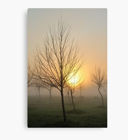 golden light of dawn Canvas Print