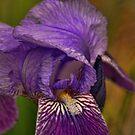 Iris Up Close by Rick  Friedle