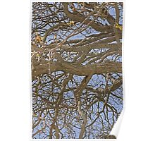 Gnarled Tree Abstract Poster