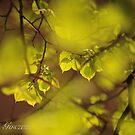 Spring Fascination. 2016. by © Andrzej Goszcz,M.D. Ph.D