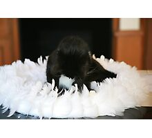 Ring of feathers ..... Photographic Print